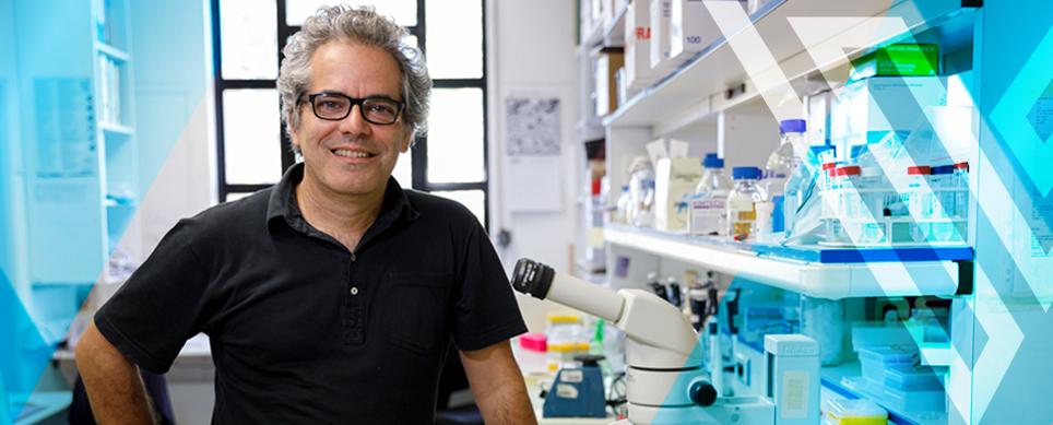 Prémio ERC-Oeiras atribuído a Miguel Soares, investigador do IGC
